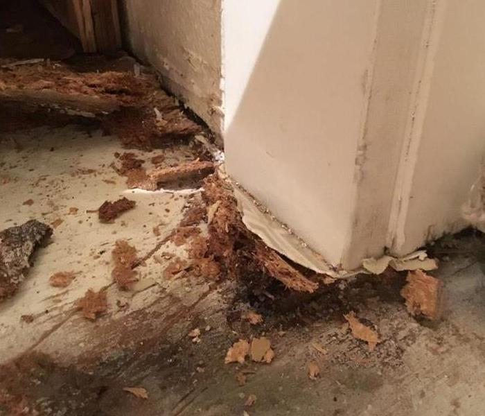 Secondary Mold Damage in North Portland