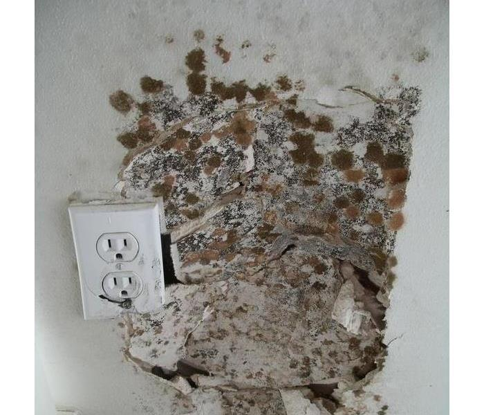 Mold Remediation For Many Portland Residents, Mold Can Be A Health Concern.