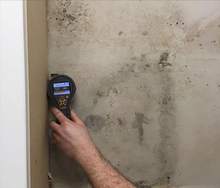 Mold Remediation Get the mold out of your Portland home before it spreads!