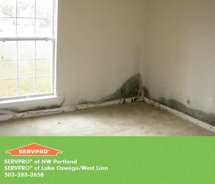 Mold Remediation Does Your Portland Home Have A Mold Problem?